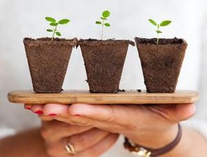 Plant375